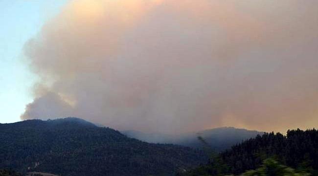 Komşu ülke Gürcistan'da orman yangını