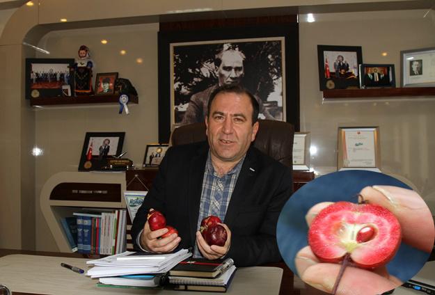 Kırmızı elma için Coğrafi İşaret çalışması başladı