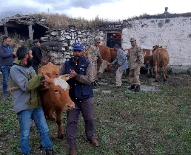 Kars'ta çaldı, Ardahan'da yakalandı