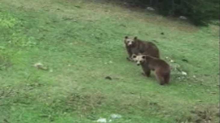 Korona ayılara yaradı