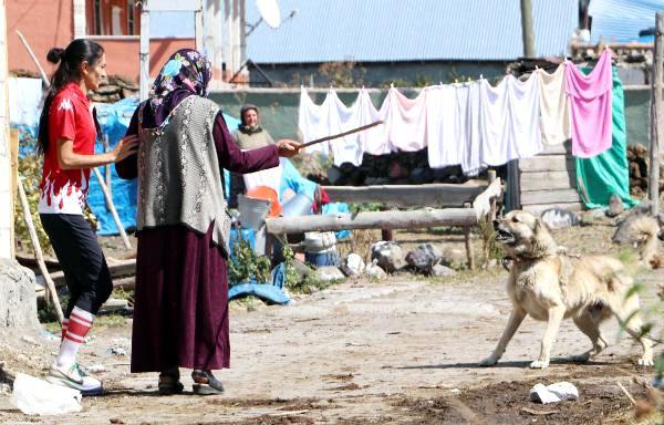 Olimpiyat yolunda koşarken köpeklerden annesi koruyor